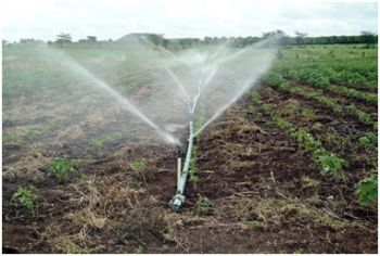Curso de Operador de Sistemas de Irrigação será disponibilizado gratuitamente pela administração
