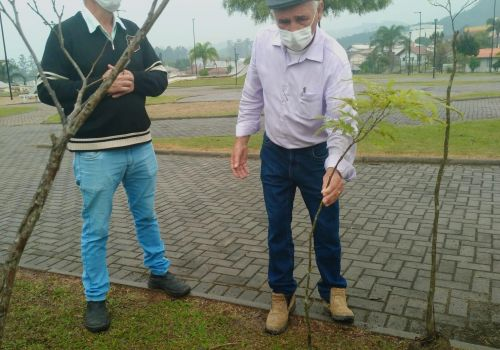 Dia da Árvore: Administração de Ituporanga inicia plantio de mais de 5 mil mudas em parques e praças