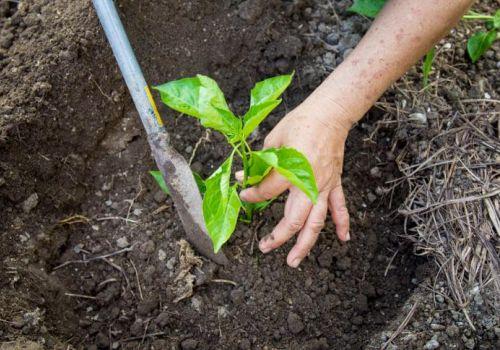 No Dia Mundial  do Meio Ambiente Administração incentiva agricultores a recuperar áreas degradadas